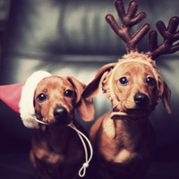 Pour retrouver votre famille à Noël