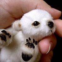 L'ourson polaire