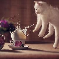 Panique à l'heure du thé