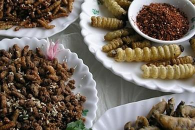 Mangeriez-vous des insectes cuisinés?
