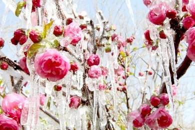 Les fleurs c'est beau, c'est magique, ça nous fait rêver.Pour laquelle rêverais-tu d'une livraison?