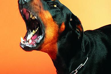 Que pensez vous des gens qui adoptent certains chiens de race pour en faire des armes?