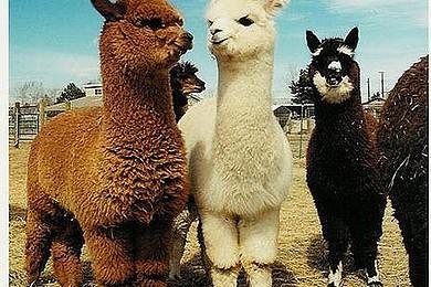 """Les animaux vous adorez, mais les bébés animaux? J'entends déjà vos """"oooooh! aaaww!"""""""