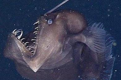 Cette créature mystérieuse a été découverte dans les profondeurs abyssales
