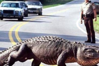 Les animaux nous réservent parfois de belles surprises! Que vous évoque cette image? À vos smileys!