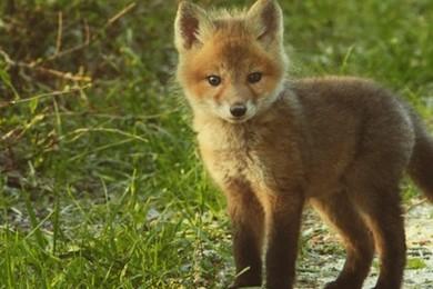 Top 5 des bébés animaux les plus mignons au monde