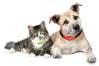 Un GPS pour chiens et chats sera bientôt commercialisé. Vous trouvez ça bien?