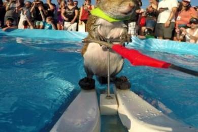 Vous connaissez Twiggy? Et oui c'est un écureuil qui fait du ski nautique! Exprimez vos sensations!