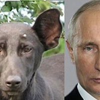 Cane-Putin