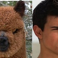 Alpaca-Jacob Black