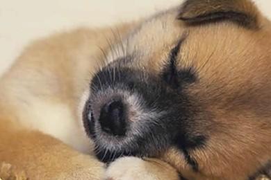 Qual è il più tenero tra questi cuccioli?