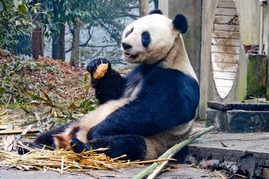 Dal 2016 Cina inizierà clonazione animali