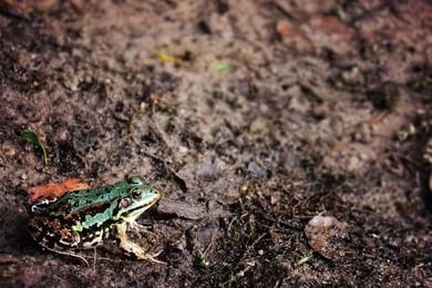 Conoscevi già questi 5 piccoli animali?