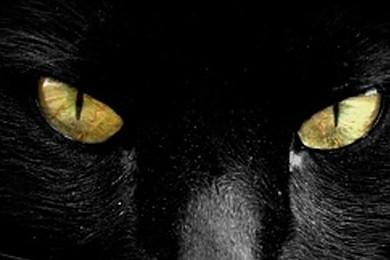 Oggi è Venerdi 17: Siete superstiziosi?