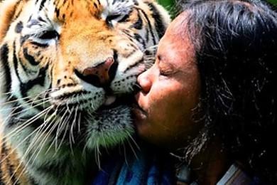 Allarme WWF: in 40 anni specie dimezzate