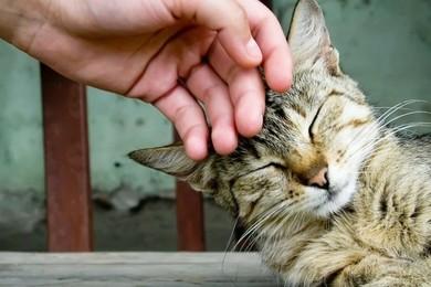Ecco perché i gatti fanno le fusa