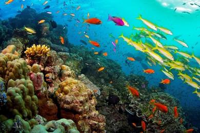 Pericolo terra: dal 2050 niente più barriere coralline
