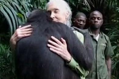 Lo scimpanzé Wounda abbraccia l'etologa che lo ha curato...