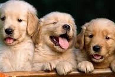 Che marca sceglieresti per gli alimenti del tuo cane cucciolo?