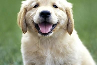 Ogni giorno in Cina, 30mila cani vengono uccisi a bastonate