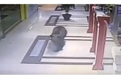 Russia, panico al centro commerciale: c'è un orso!
