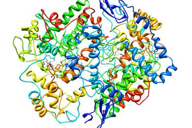 Scoperto l'enzima che blocca l'invecchiamento!