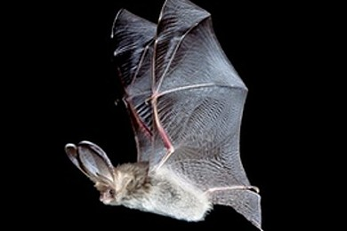 A bat gets stuck in your hair - is there anything more revolting?