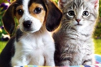 The time has come to buy a pet: would you choose a cat over a dog?