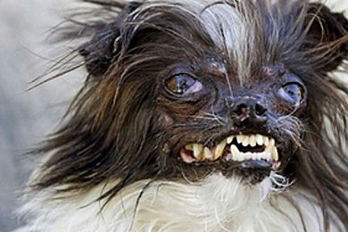 This is officially the ugliest dog ever