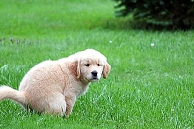 Next door have got the most beautiful puppy ever, until it does its business on your lawn