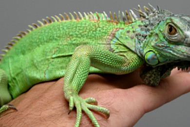 How would you react if you received an exotic pet as a gift?