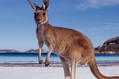 You get offered the chance to emigrate to Australia - only clause, there's no going back…..