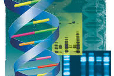 There should be something similar to a DNA paternity test, but for…
