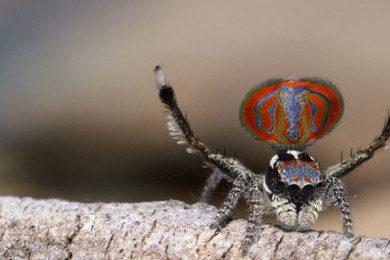 New type of spider is named after Lord Of The Rings character