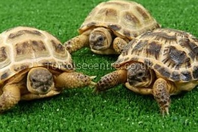 Are tortoises very boring pets?