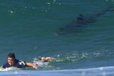 Surfers - would you surf in shark filled waters?
