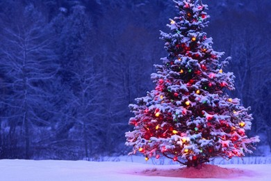 Find out where you can see the 10 best Christmas Trees in the world